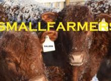 smallfarmers's picture